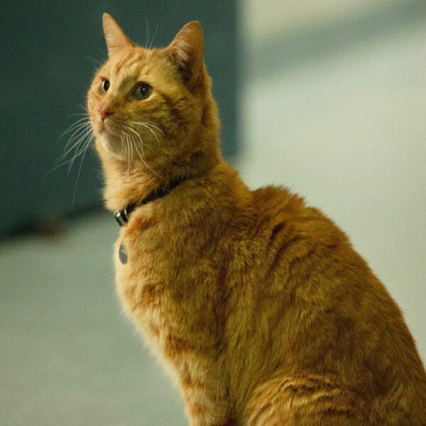 Кто такой кот Гусь из фильма Капитан Марвел